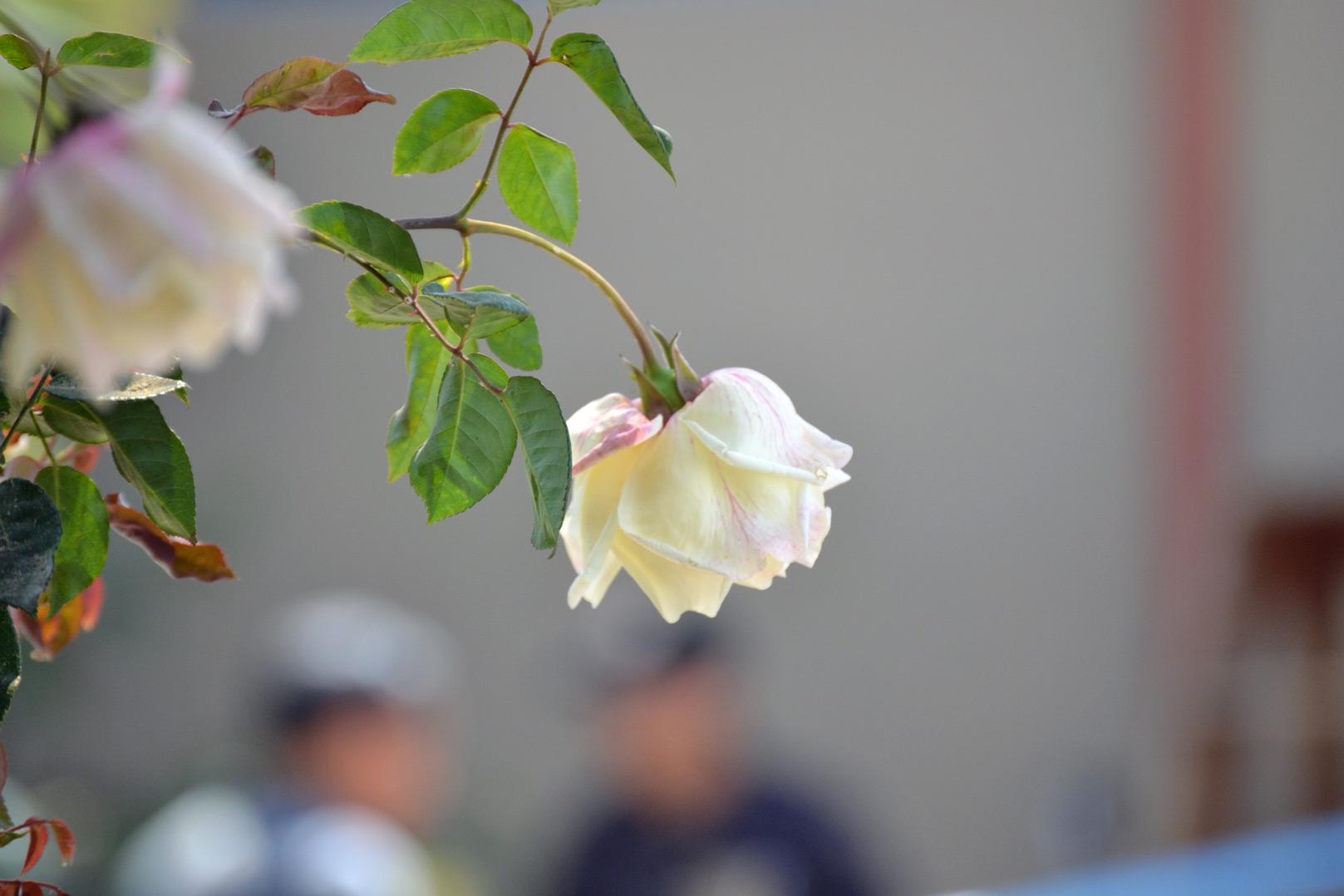don-carlos-familia-alvarado-restauranteros-xela-foodie-tour-guatemala-mister-menu-familiar-reportaje-tertulianos-chalet-pablo-jardin-rosa