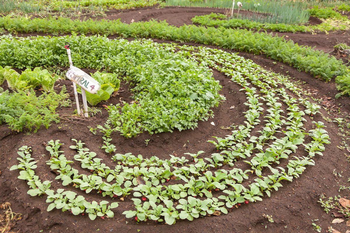 Los surcos del huerto de Agrofenomenal forman espirales que se encuentran entre sí