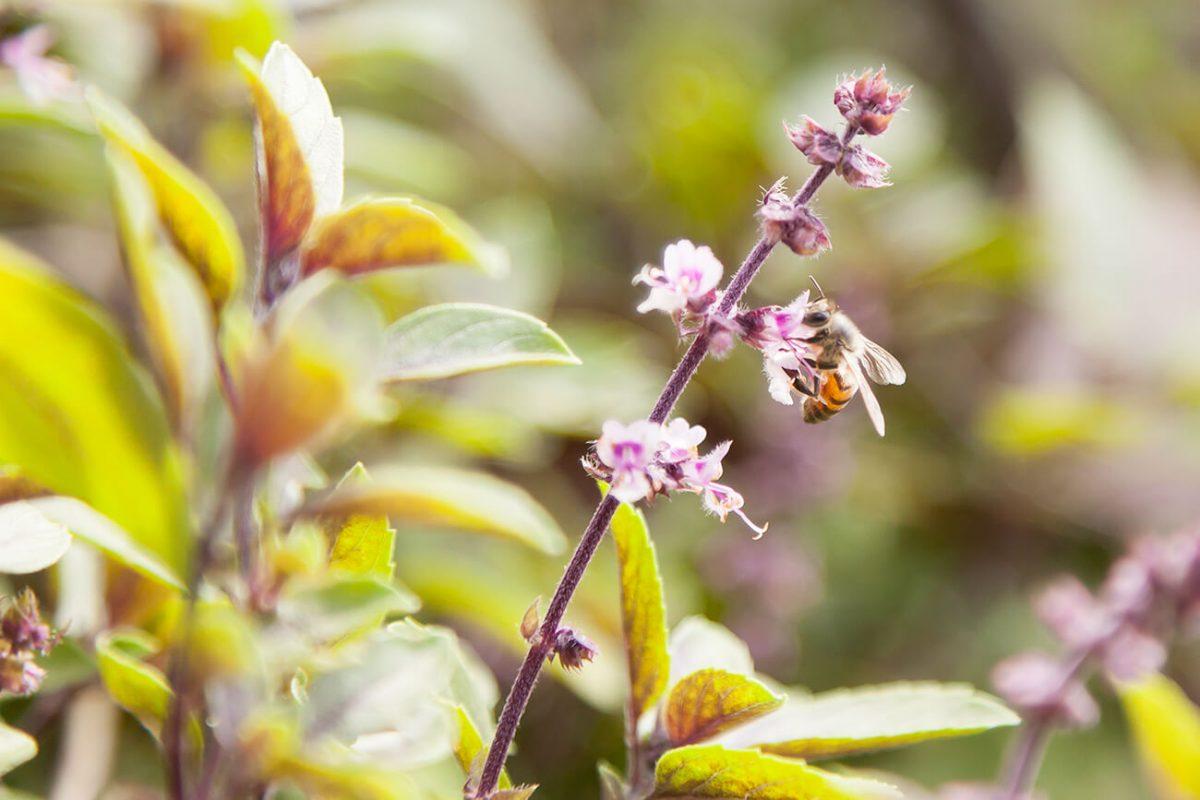 Una abeja nos acompaña en la visita a Agrofenomenal