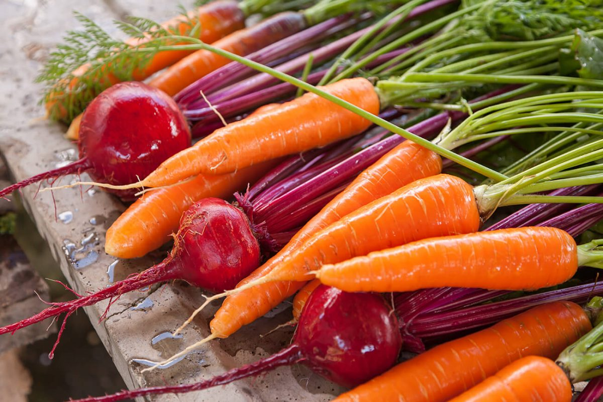 Zanahorias y rábanos del huerto de Agrofenomenal
